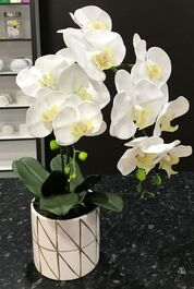 ARTIFICIAL POTTED ORCHID - WHITE - 55CM
